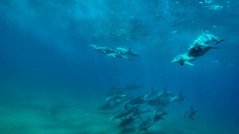 Delfine im Ponta do Ouro Partial Marine Reserve, White Pearl Resort © Diamir