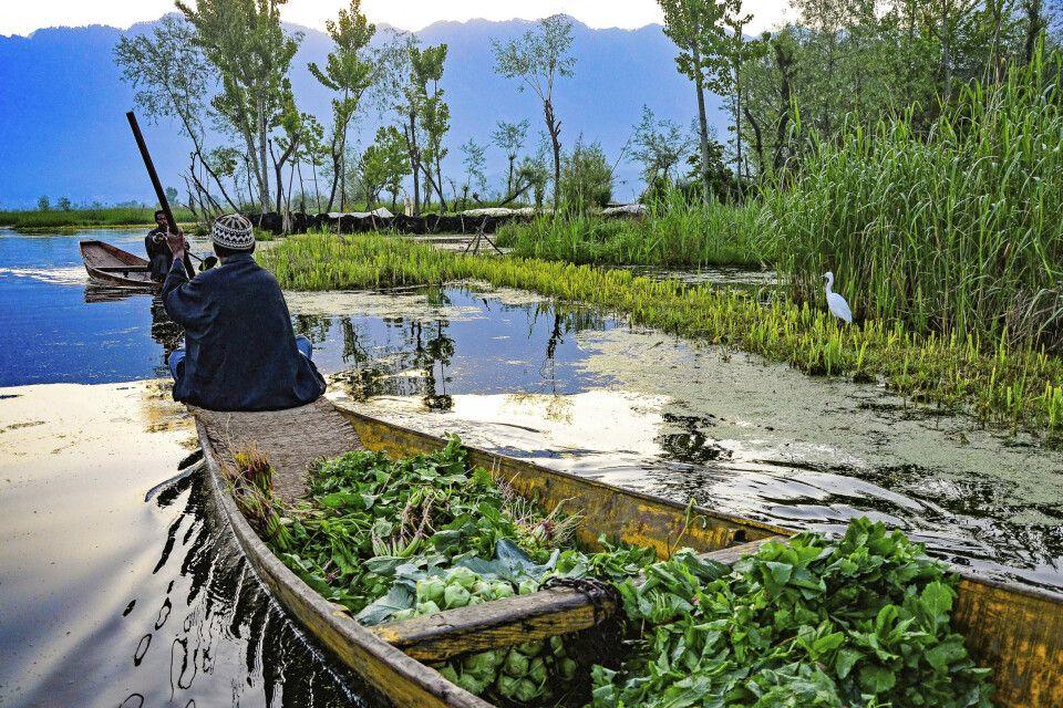 Auf dem Dal See in Kaschmir