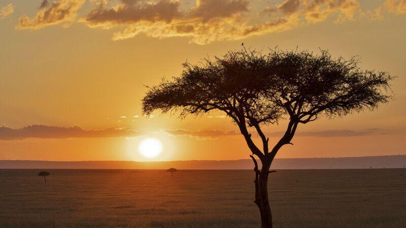 Schirmakazie vor afrikanischem Sonnenuntergang © Diamir