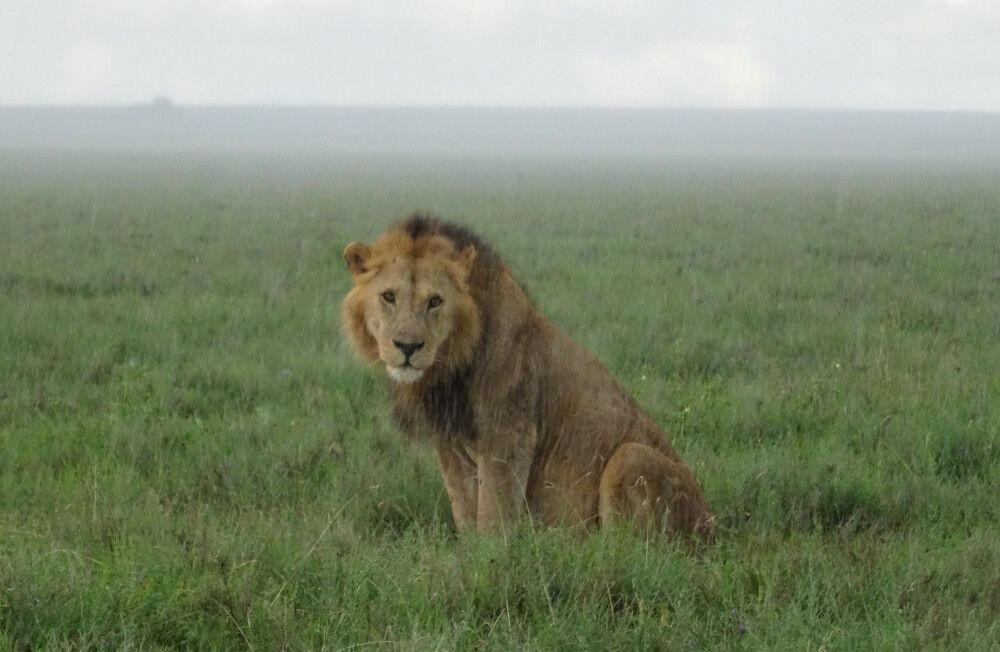 Au dem Weg in die Serengeti