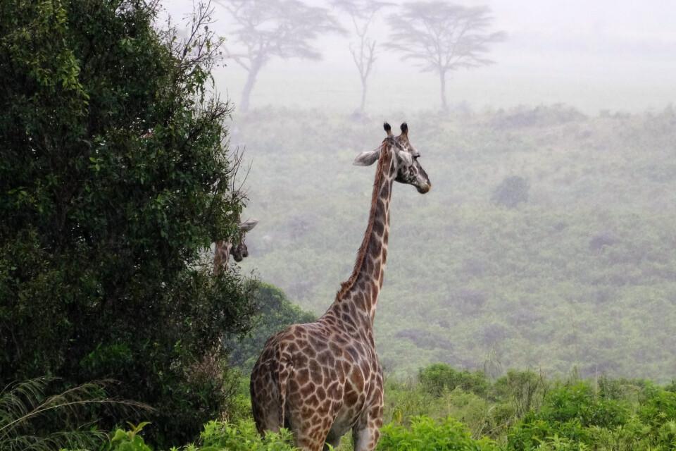Blick in den Arusha Nationalpark