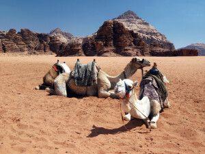 Wadi Rum Felsformationen und Kamel-Siesta
