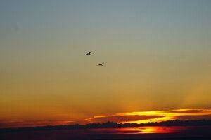 Ein Ara-Pärchen versüßt den Sonnenuntergang