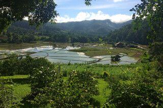 Reisfelder bei Chiang Mai