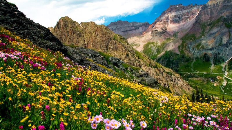 Blumenwiese, Governor's Basin nahe Ouray, Colorado © Diamir