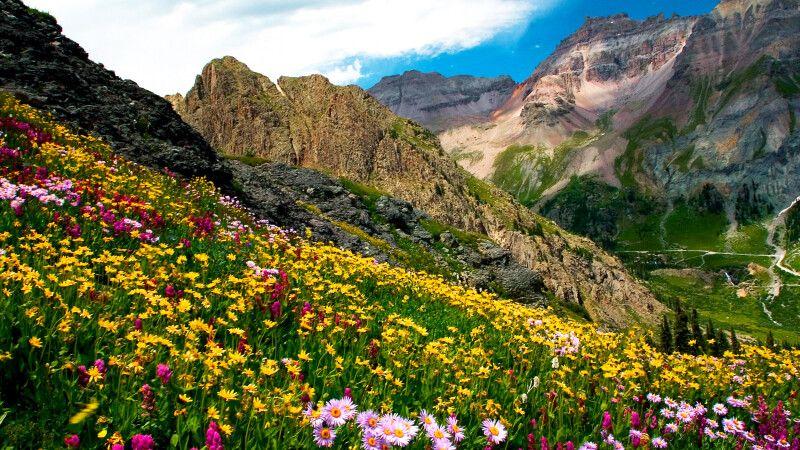 Blumenwiese, Governor's Basin nahe Ouray, Colorado © Diamir