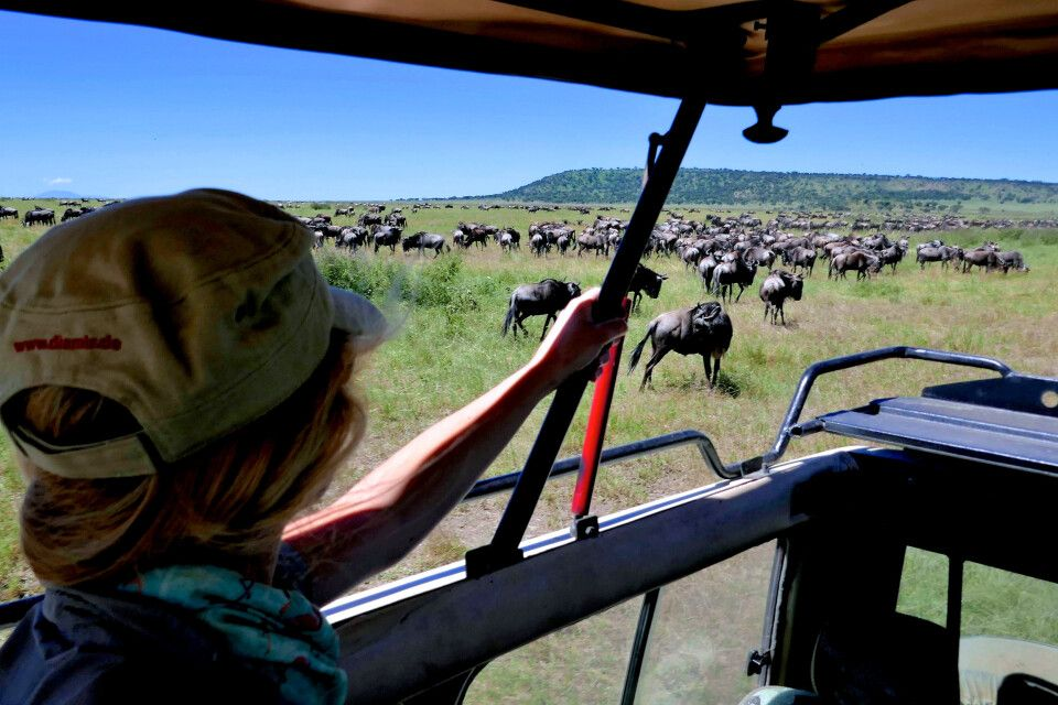 Gnu-Migration in der Serengeti