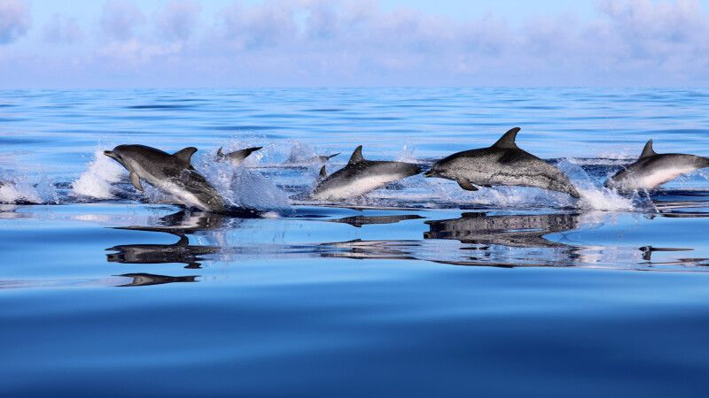 Delfinbeobachtung © Diamir