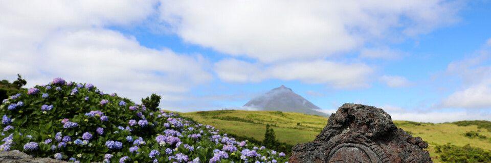 Blick über blühende Hortensien zum Pico