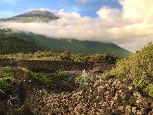 Die traditionellen Weinfelder Picos