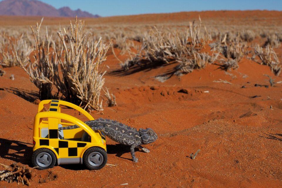Chameleon im Playmobilfahrzeug