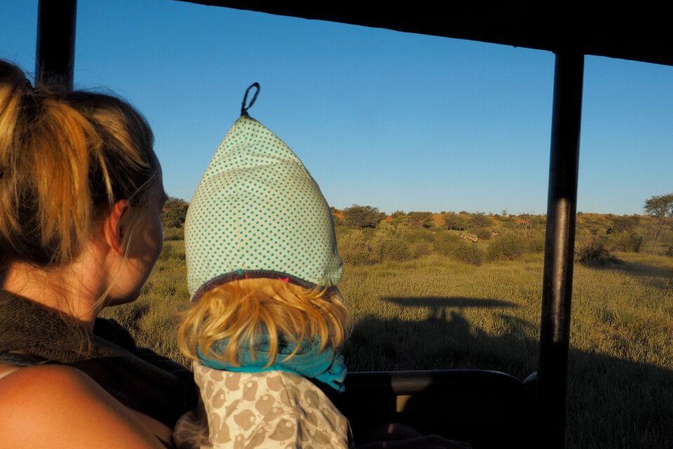 Pirschfahrt bei der Kalahari Red Dunes Lodge