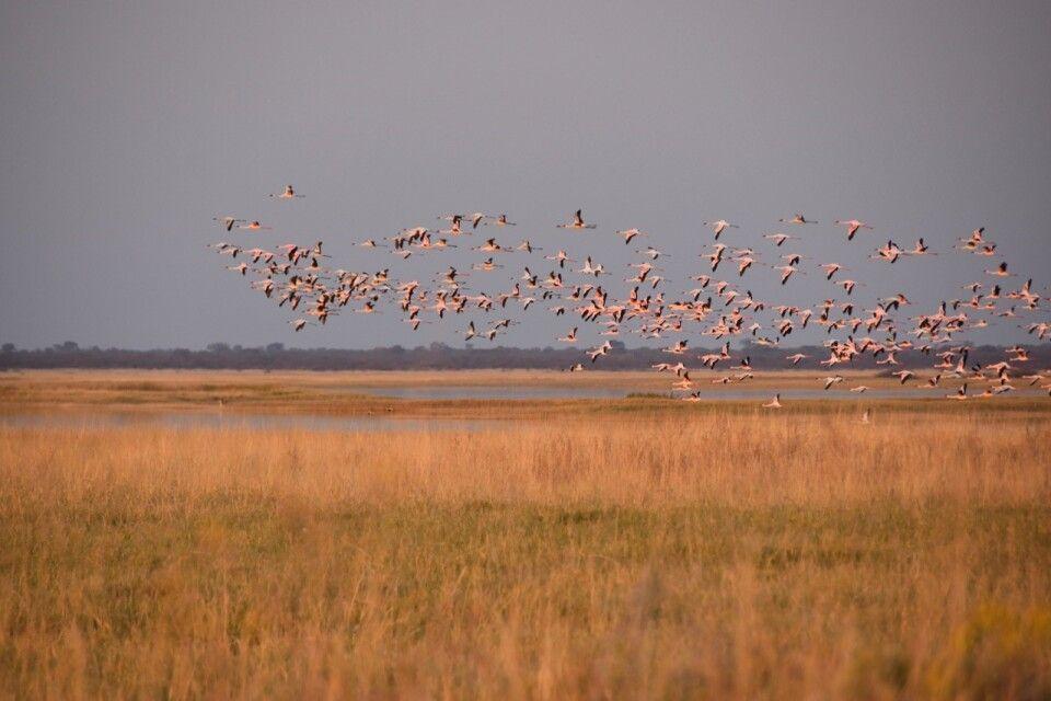 1000 Flamingos
