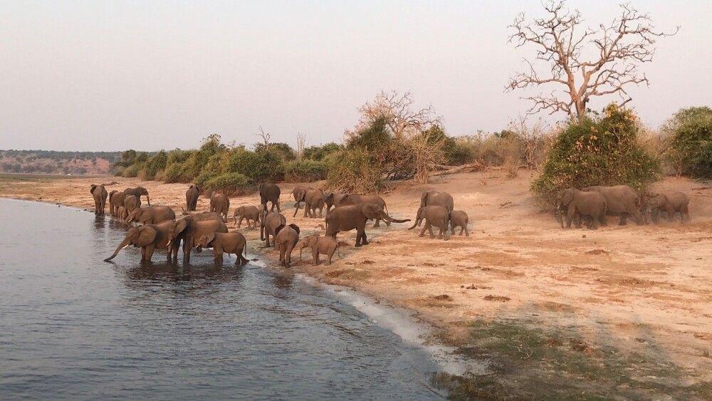 Eine Elefantenherde stillt ihren Durst