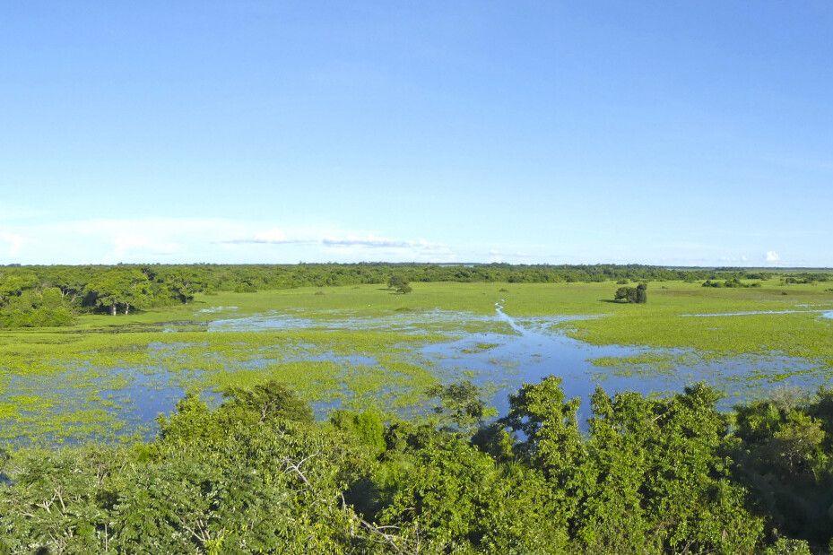 Ausblick über die Weite des Pantanal