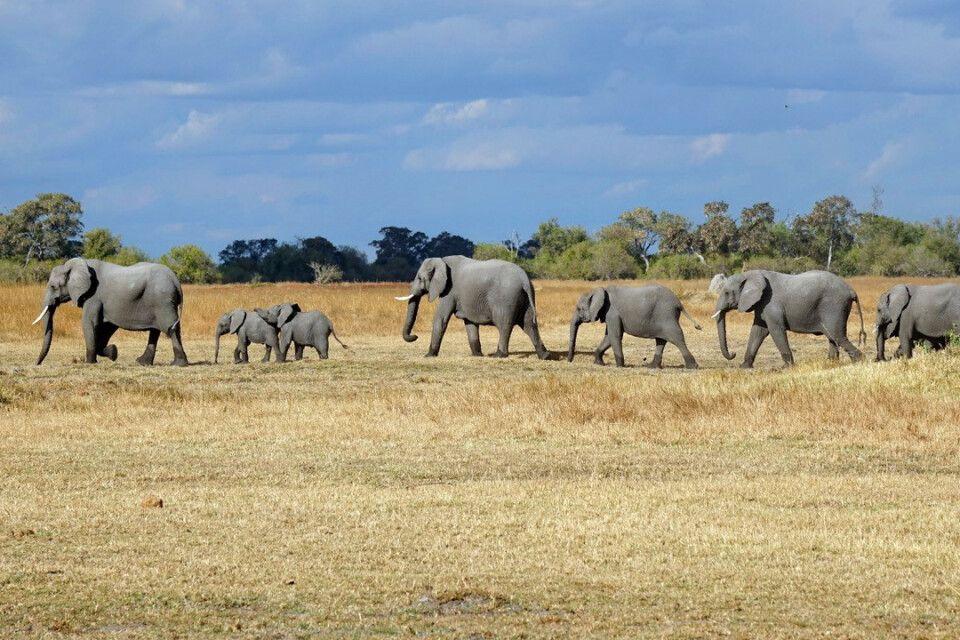 Elefantenkarawane