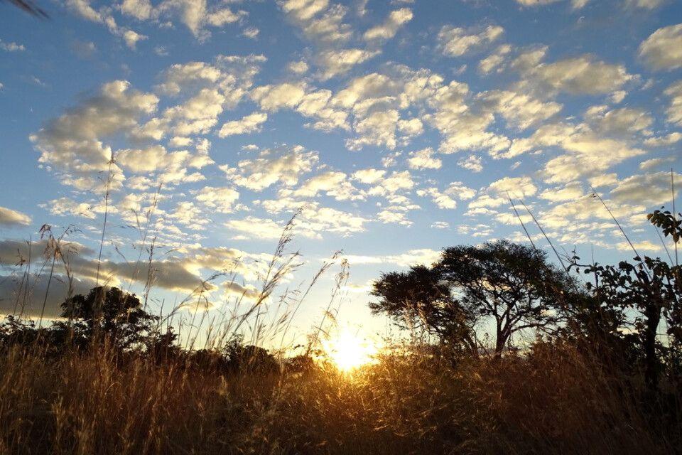 Sonnenaufgang im Busch