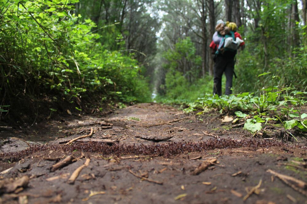 Beginn der Besteigung des Mount Kenya