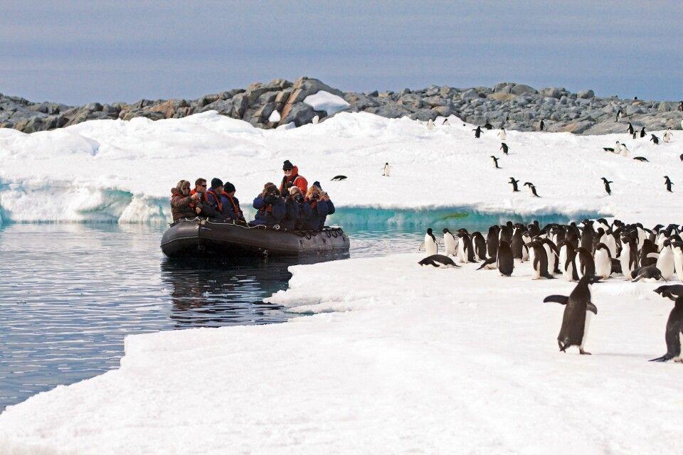 Hautnah an der Pinguinkolonie