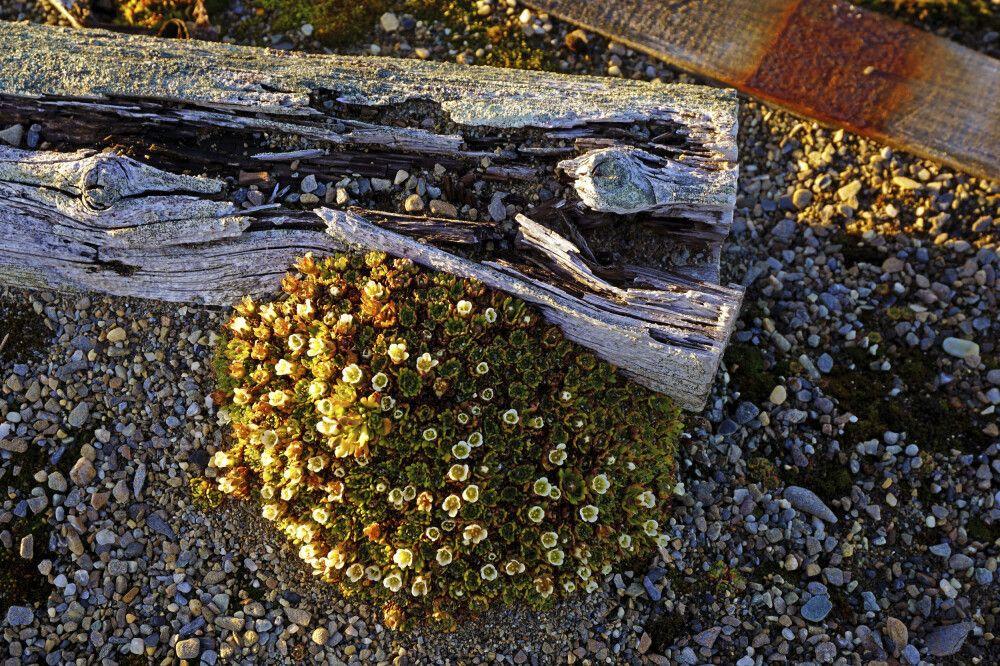 Spitzbergen-Detail