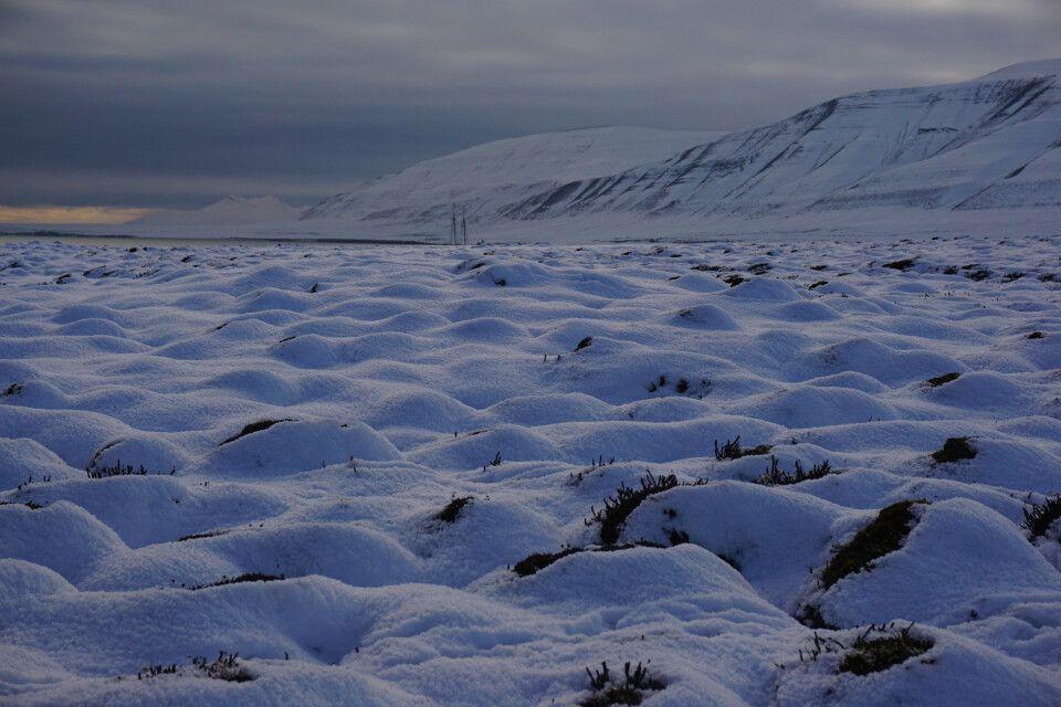 Frischer Schnee auf Flintholmen