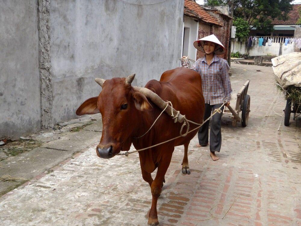 Im Dorf Duong Lam in der Nähe von Hanoi
