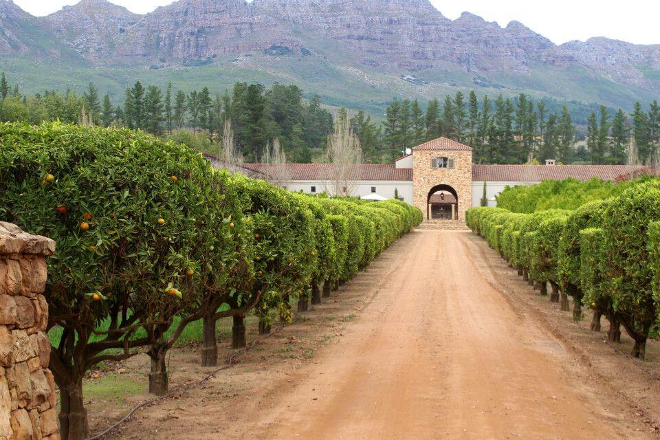 Weingut Waterford Estate in Stellenbosch