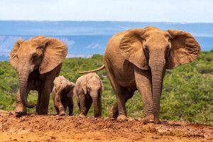 Elefantenfamilie im Addo Elephant Park