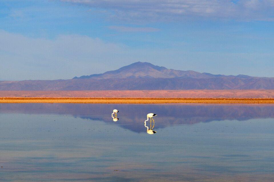 Spiegelung in der Atacama