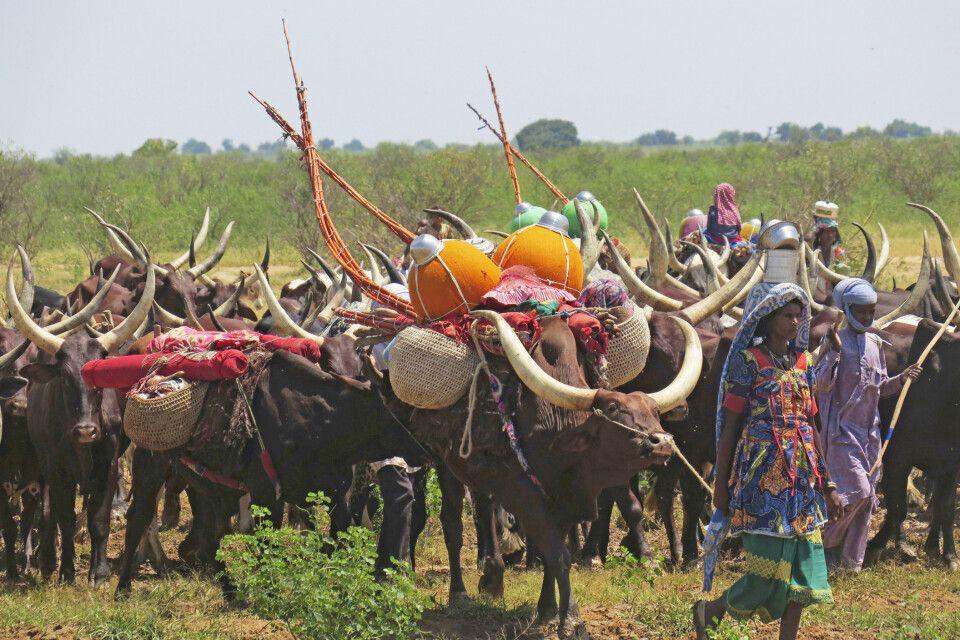 Begegnung mit Nomaden im Tschad