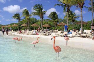 Die Flamingos am Flamingo Beach der Renaissance Island sind nicht scheu und lassen Besucher nah an sich heran.