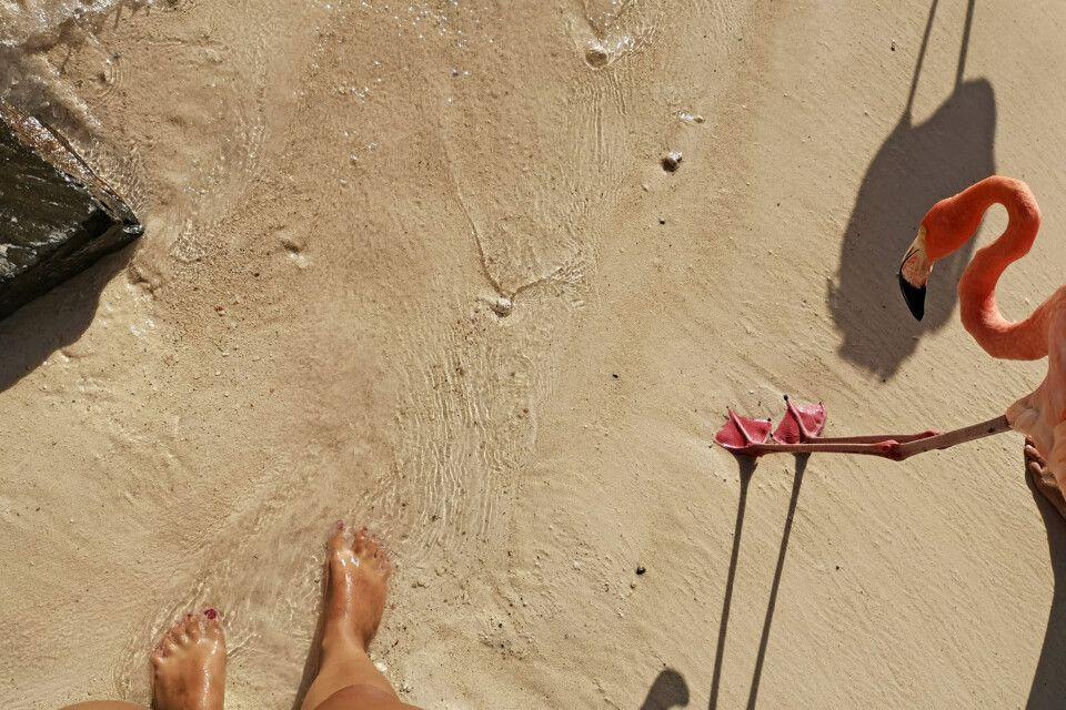 Wer hat die schöneren Füße? Die Flamingos auf Renaissance Island scheinen die frische Abkühlung genauso sehr zu genießen wie die Touristen.