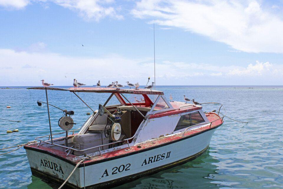 Fast schon neidisch blicken hungrige Möwen auf die Tische der Gäste des Zeerovers auf Aruba.