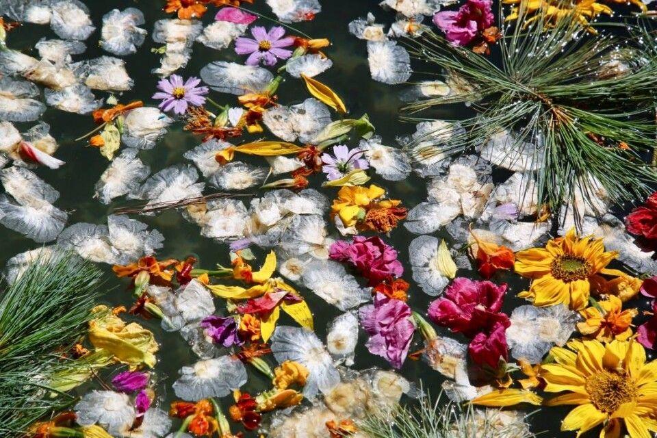 Blüten und Zweige