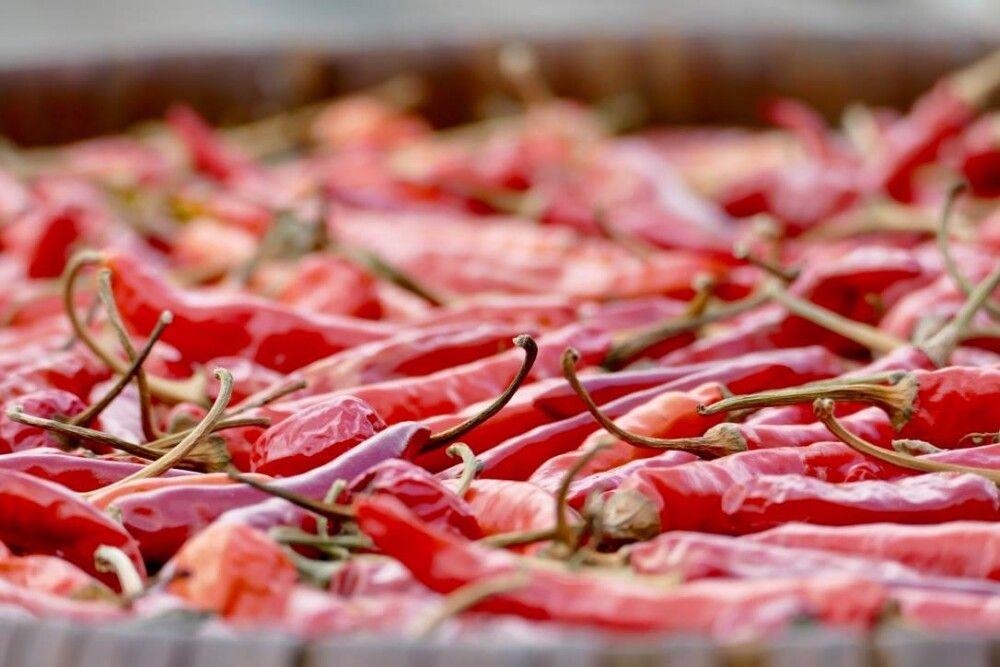 Immer ein Hingucker – feuerrote Chilischotten