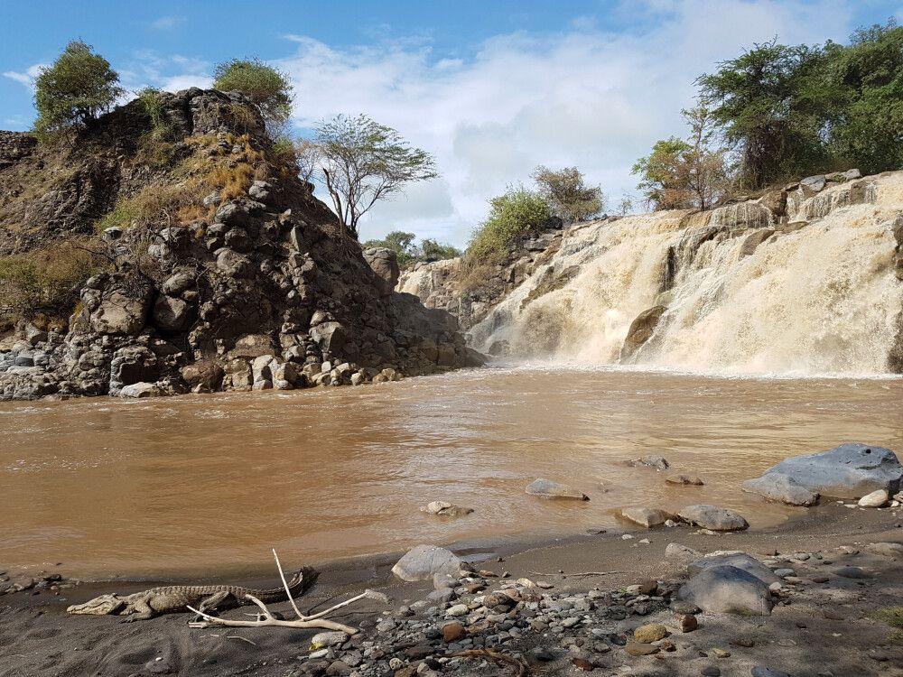 Krokodil am Awash-Wasserfall