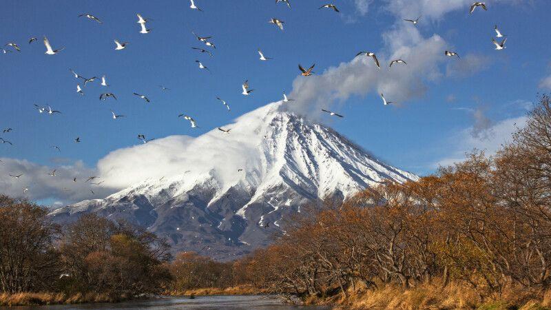 Vulkan Kronotsky und Vogelschwarm © Diamir
