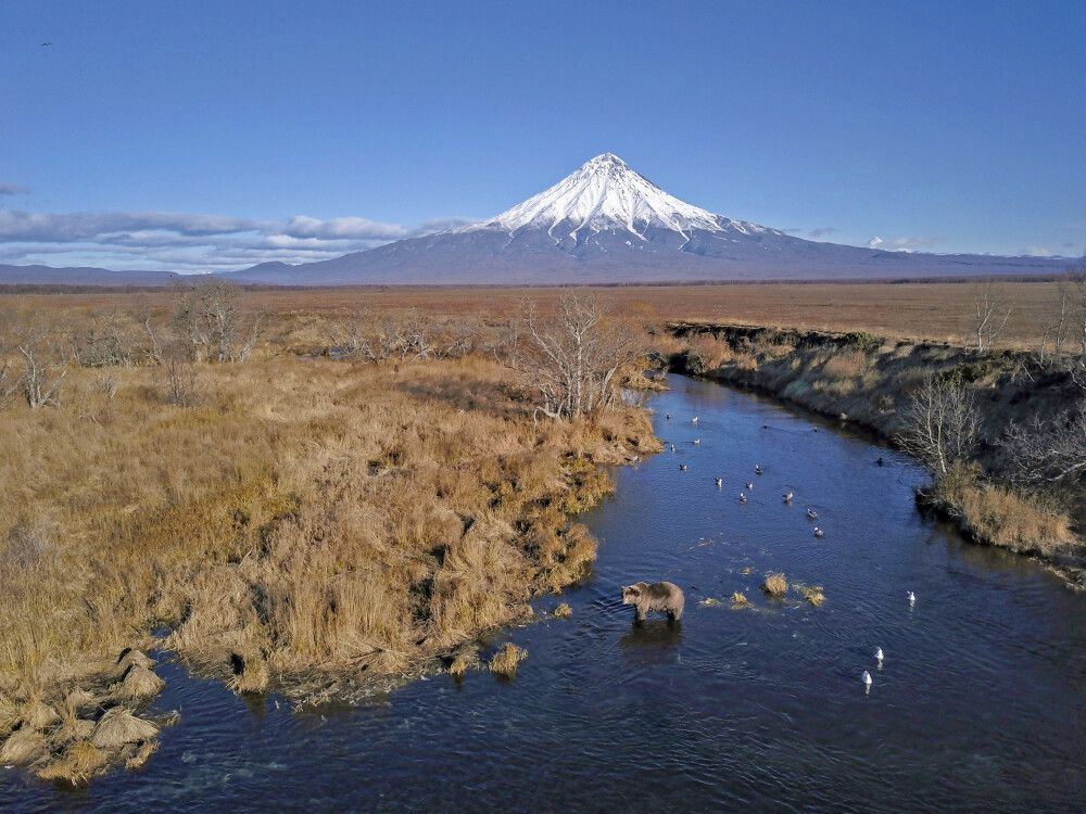 Bär im Fluß aus Drohnenperspektive