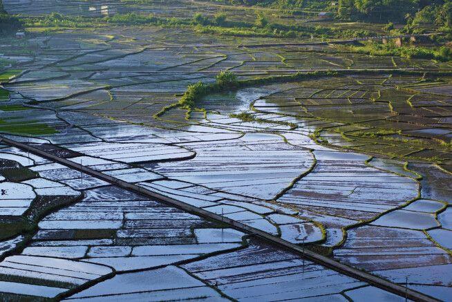 Reisfeldmosaik in Vietnam