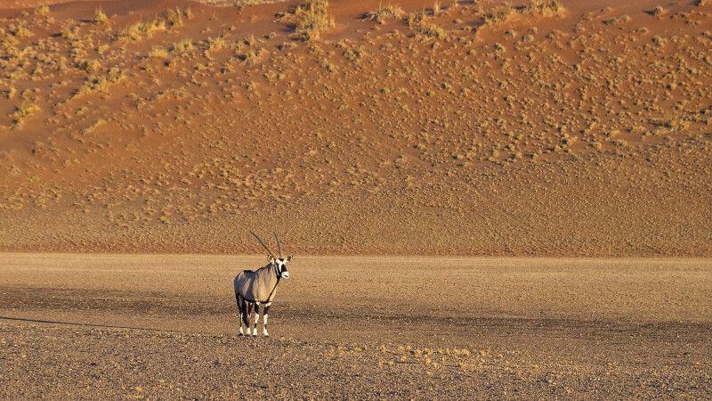 Oryxantilope im Sossusvlei © Diamir