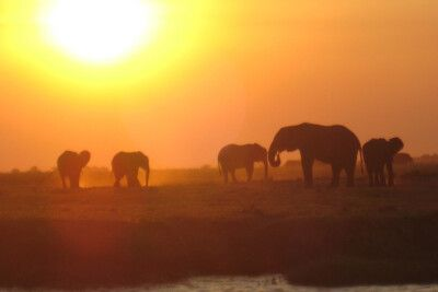 Elefanten im Sonnenuntergang, Simbabwe
