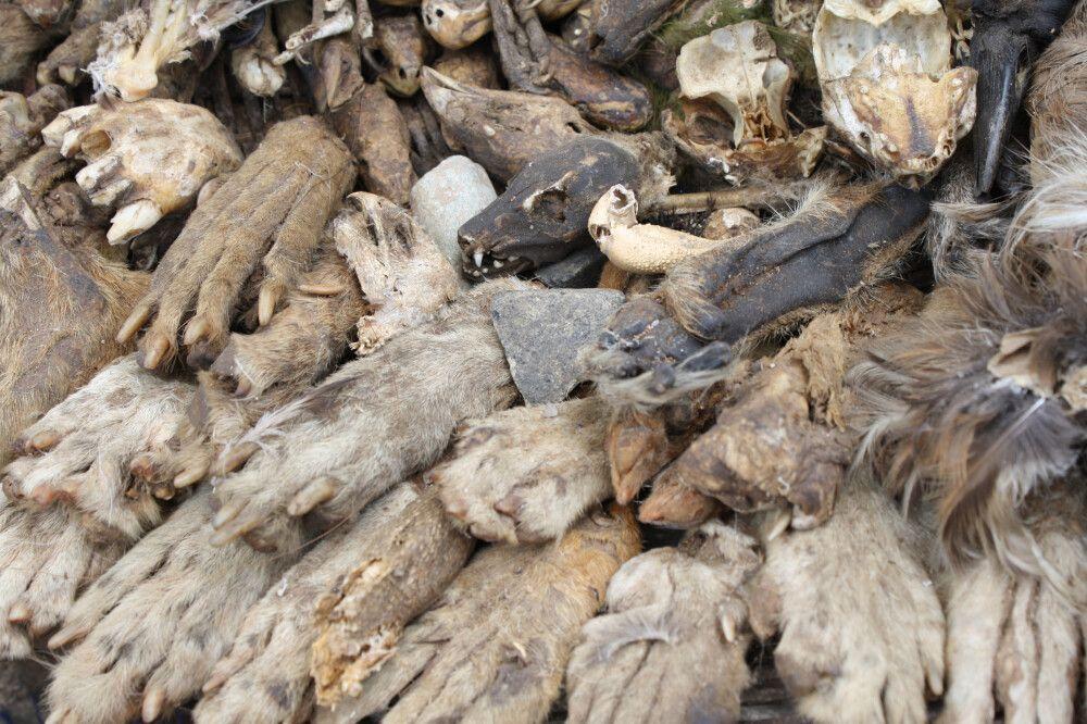 Akodessewa Fetischmarkt in Lome – der größte Westafrikas. Bei gesundheitlichen Beschwerden wenden Sie sich an einen Priester, lassen sich ein Rezept ausstellen und kaufen die hierzu benötigten Zutaten auf genau diesem Markt ein. Tierzähne oder -hände, Inn