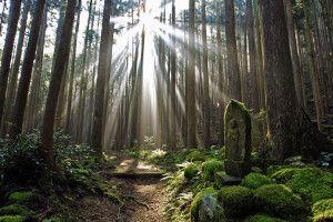 Mystische Wälder entlang des Kumano Kodo Pilgerweges