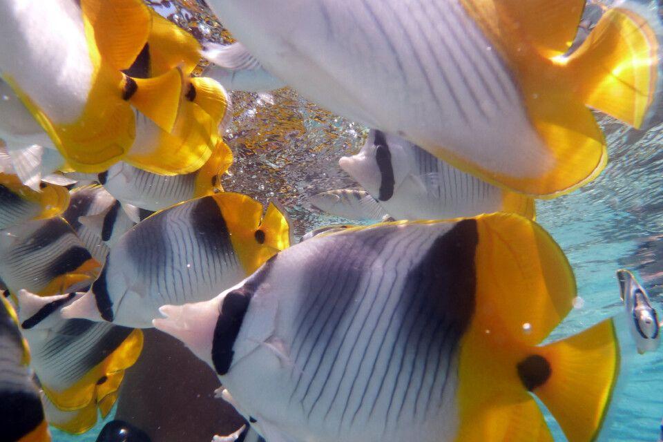Bunte Fische in der Südsee