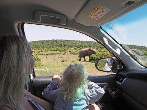 Mit dem Mietwagen im Addo Elephant Park