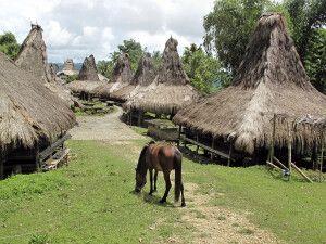 Traditionelle Häuser in einem Dorf der Kodi