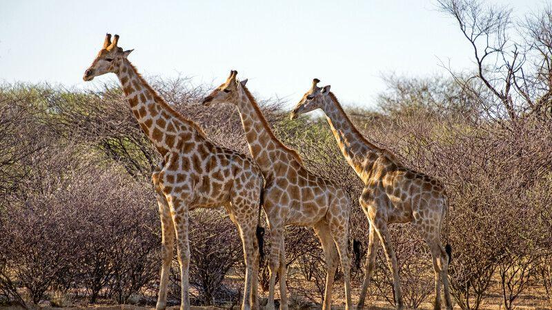 Namibias Tierwelt hautnah © Diamir