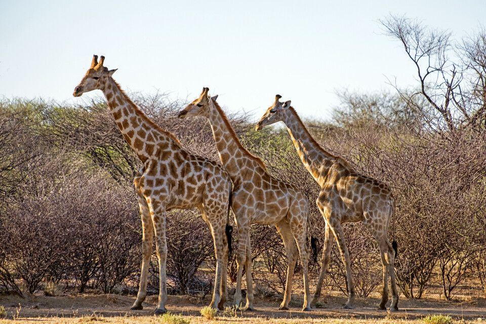 Namibias Tierwelt hautnah