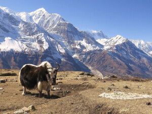 Ausflug zum Icelake mit Annapurna-Panorama