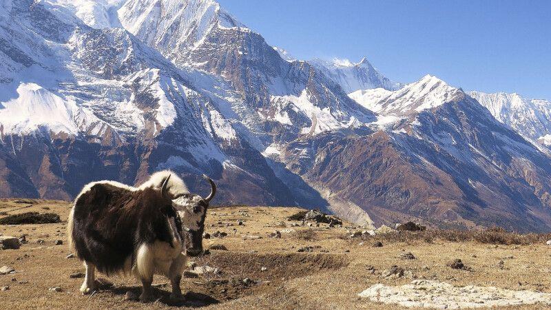 Ausflug zum Icelake mit Annapurna-Panorama                                © Diamir